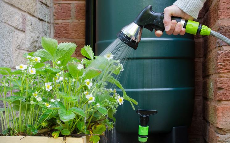 Get Fall Gardening Advice at Arlington Water Utilities, Arlington Public Library Classes