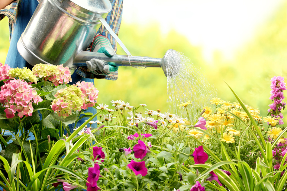 Get Ready for Spring with the Library and Arlington Water Utilities